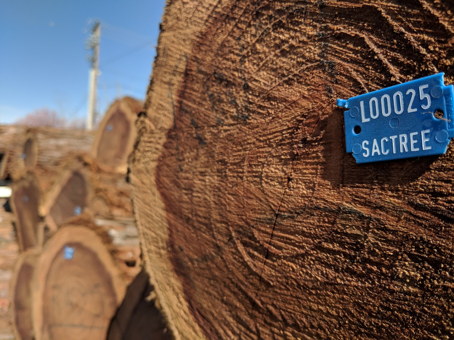 Sac Tree Foundation's Urban Wood Rescue program and Hacker Lab