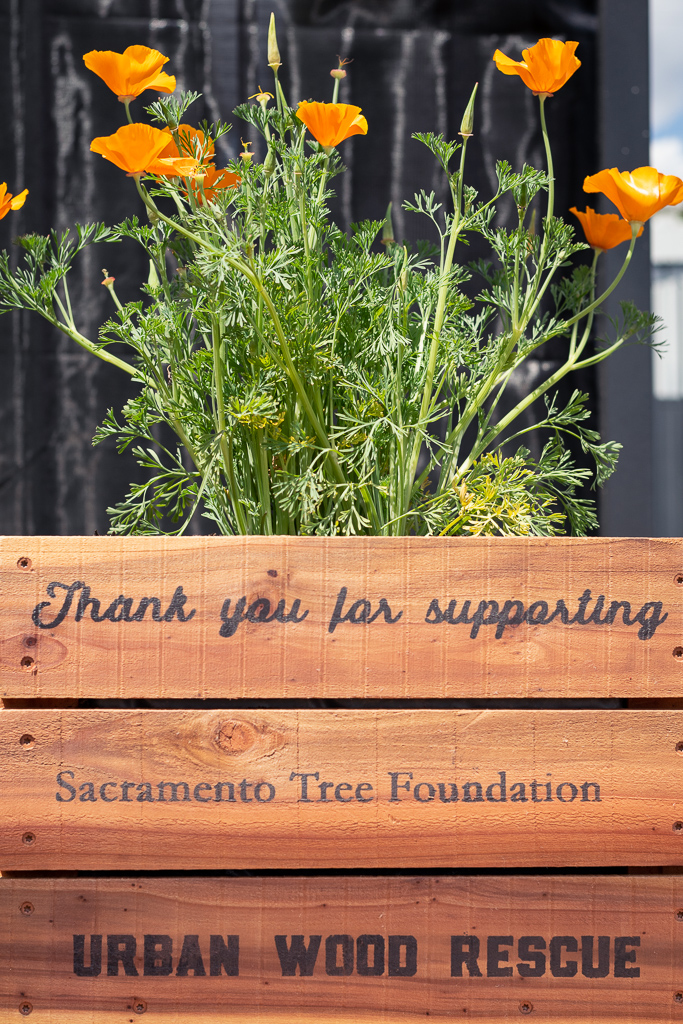 Sac Tree Foundation